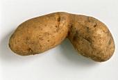 A potato, variety Bamberger Hörnchen