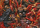 Various dried chillies (2, filling the picture)