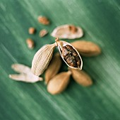 Cardamom capsules, some opened, on green background