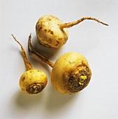 Three Teltower turnips