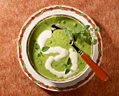 Cream of pea soup with oregano in soup plate