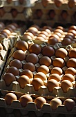 Brown eggs in egg trays at the market