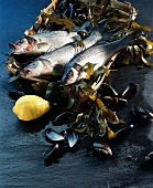 Sea perch and mussels on seaweed in bast basket