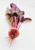 A beetroot with leaves on white background