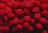 A Ripe Red Raspberry