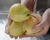 Hands holding three pears under running water