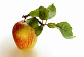 Red and Yellow Apple with Stem and Leaves