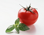 A tomato and basil