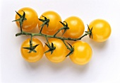 Truss of yellow tomatoes