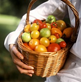 Hand holding basket of various types of tomatoes in open air