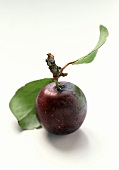 A Plum with Stem and Leaves