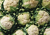 A few cauliflowers, filling the picture