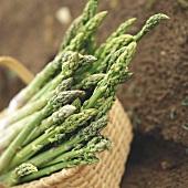 Green asparagus - freshly cut in basket on soil