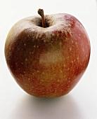 A Boskop apple