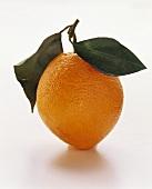 An orange with leaf stem