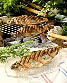 Grilled trout with bacon on plate and grill rack