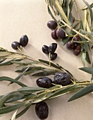 Three different branches with black olives