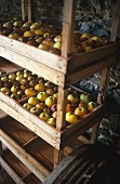 Apples stored on a wooden shelf