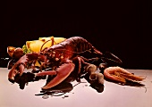 Lobster, mussels and shrimps against a black backdrop