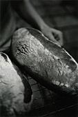 Frisch gebackene Brote auf Backgitter (s-w-Aufnahme)