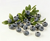 Blueberries with blueberry leaves on a white background