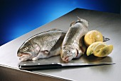 Two trout, with kitchen knife & lemons beside them
