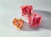 Three sugared rose petals as cake decoration