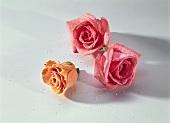 Three sugared rose petals as cake decoration