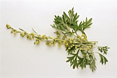 Wormwood, flower and leaves