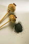 Poppy seed capsules and heap of poppy seeds
