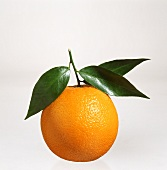 An orange with leaves