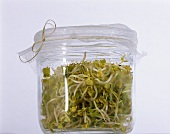 A glass container of fresh radish sprouts