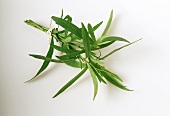 Several sprigs of tarragon tied together in a bunch