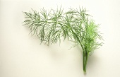 Sprigs of dill against white backdrop