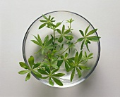 Woodruff in a glass bowl with water