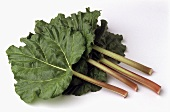 Four sticks of rhubarb with leaves