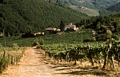 Road leading through Chianti Classico vineyard, Tuscany