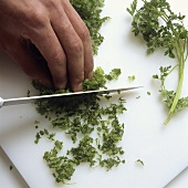 Finely chopping chervil