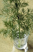 Dill sprig in a glass