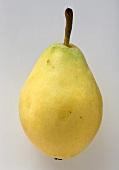 Eine gelbe Birne der Sorte Santa Maria