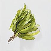 Petai beans (Parkia speciosa)