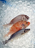 Red snapper, seabream and sea perch on ice