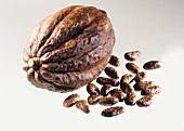 Cacao fruit and cocoa beans