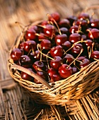 Freshly picked cherries in basket