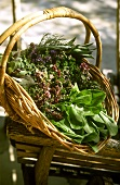 Basket of fresh garden herbs from Provence