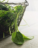 Spinach in wire basket and two leaves beside it