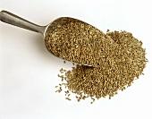 Grains of rye on scoop