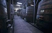 Wine cellar of Montes Wine Estate, Curico, Chile