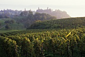 Vineyards at Überlingen, Lake Constance area, Baden-Württemberg