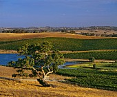 Mountadam vineyards, Eden Valley, S. Australia
